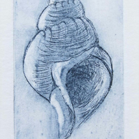 Original etching of a whelk seashell no. 4 of 65 in a limited edition