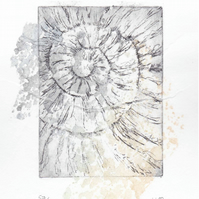 Etching no.57 of an ammonite fossil with chine colle in an edition of 100