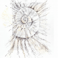 Etching no.64 of an ammonite fossil with mixed media in an edition of 100
