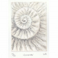 Etching no.76 of an ammonite fossil with mixed media in an edition of 100