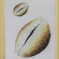 Cowrie shell original watercolour painting