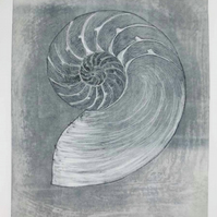 Original drypoint etching of a chambered nautilus shell cross section