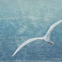 A gull gliding on a sea breeze over the ocean ready to frame art