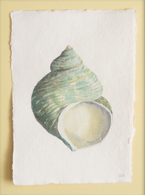 Watercolour painting of a green turbo sea shell whelk coastal nature study