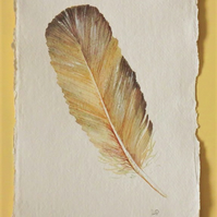 Original watercolour painting of a feather natural history illustration series
