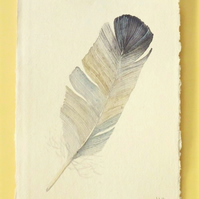Original feather watercolour painting of a grey feather natural history art