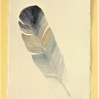 Natural history feather watercolour illustration painting