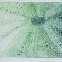 Semi abstract sea urchin solar etching artist proof print in green
