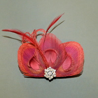 Wine Red Peacock Feather Hair Clip Bridesmaids Fascinator Wedding 'Lizbeth'