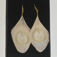 Nude Peacock Eye Feather Trimmed EARRINGS Gold Plated Golden Cream