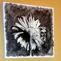 Pen and ink drawing of a daisy by Suzie Nichols