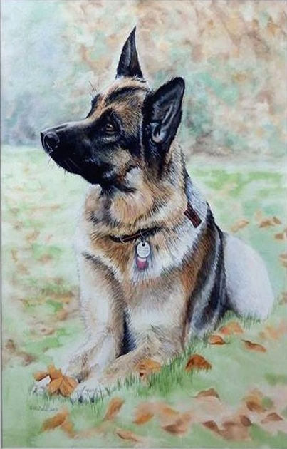 Commission Pet Portrait Painted in Watercolour From Customers Own Photograph
