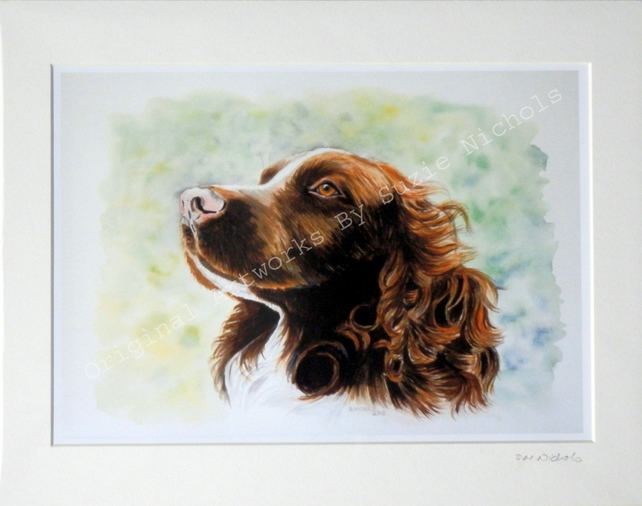 Spaniel Dog- Quality Mounted A4 Giclee Art Print by Artist Suzie Nichols