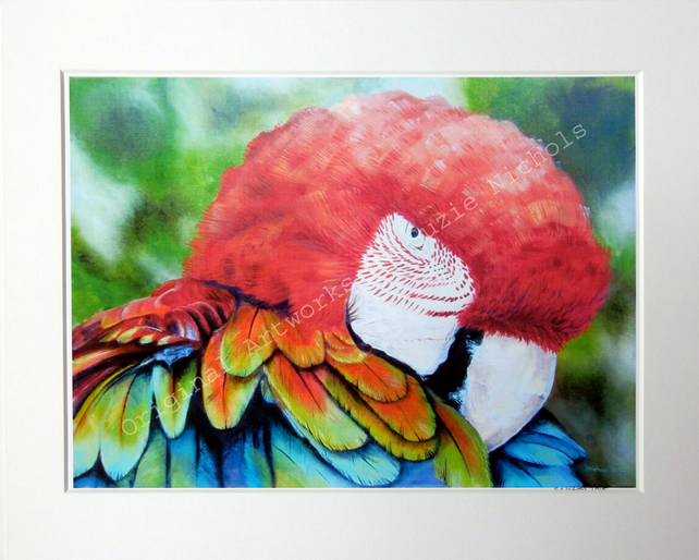 A4 Quality Mounted Giclee Art Print of a Macaw Parrot - by Artist Suzie Nichols