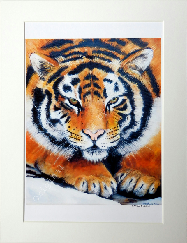 A4 Quality Mounted Giclee Art Print of a Tiger - by Artist Suzie Nichols