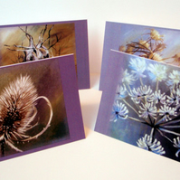 Autumn Seedheads.Set of 8 blank artcards depicting the artwork of Suzie Nichols.