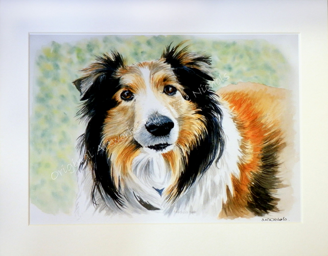 Collie Giclee Print- Quality A4 Mounted Giclee Print by Artist Suzie Nichols