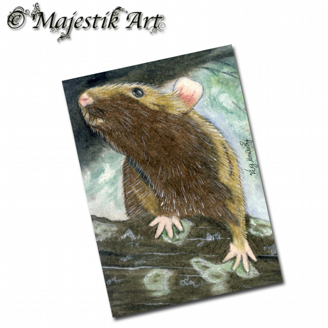 ACEO Print Rat Rodent Animal Pet CAN YOU SEE ME?