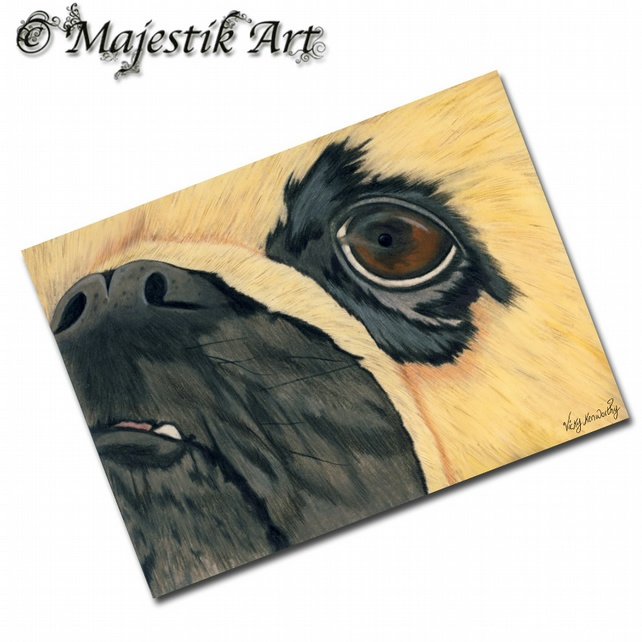 ACEO Print Pug Animal Pet Canine Dog CLOSE UP