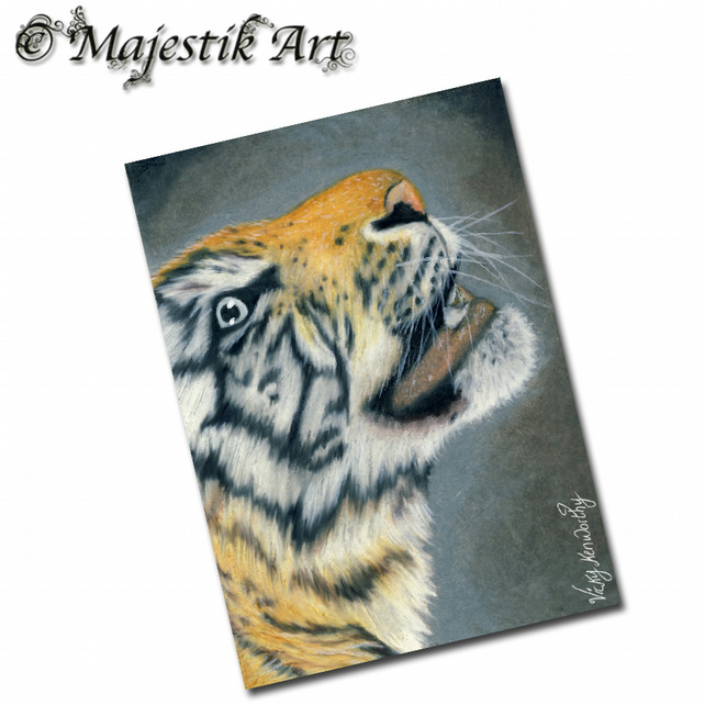 ACEO Print Tiger GAZE Big Cat Wildlife Animal
