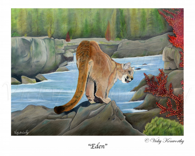 "Mountain Lion Fine art Print 8"" x 10"" Archival EDEN Wildlife"