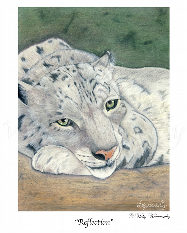 Snow Leopard Fine art Print A4 Archival REFLECTION Wildlife