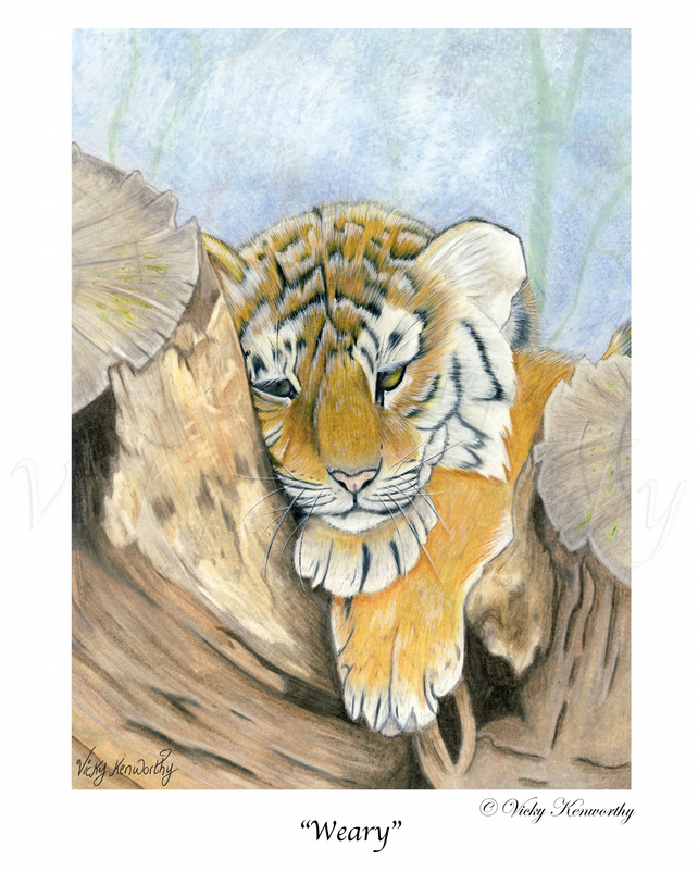 "Tiger Cub Fine art Print 8"" x 10"" Archival WEARY Wildlife"