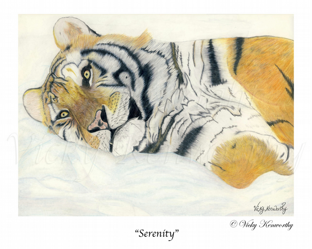 Tiger Fine art Print A3 Archival SERENITY Wildlife