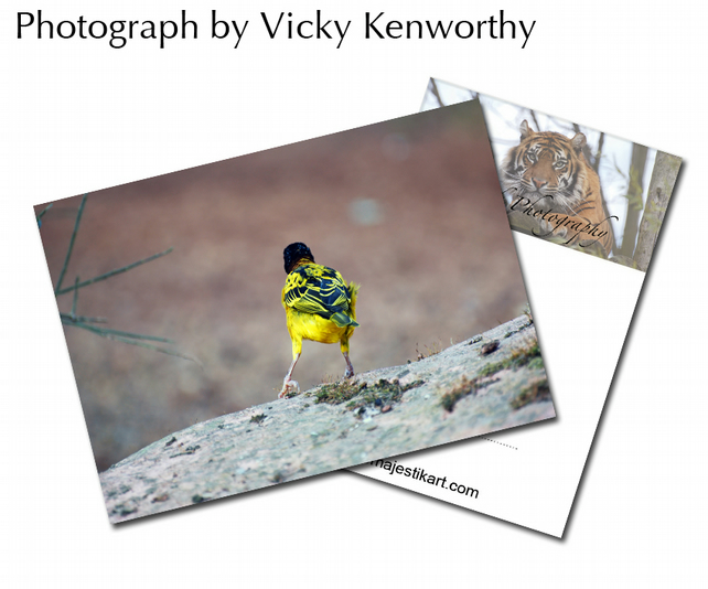 Bird ACEO Print Photography by VK