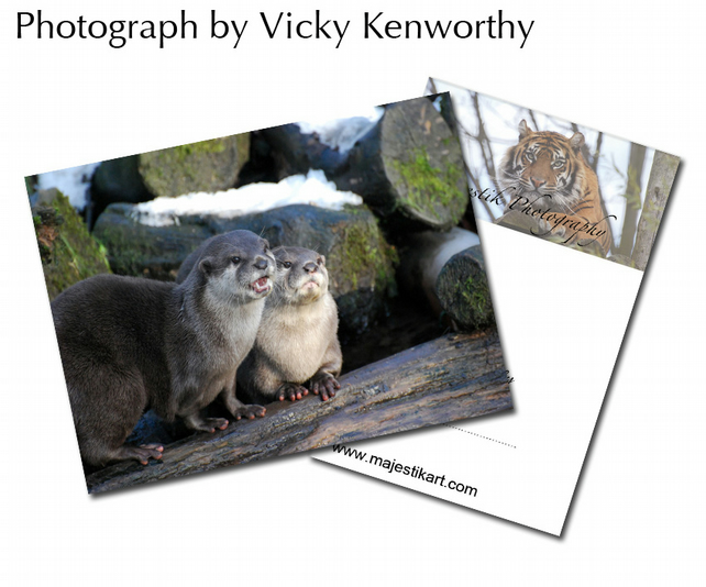 Otter ACEO Print Photography by VK