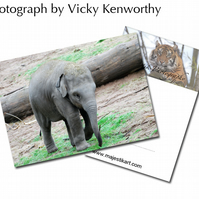 Elephant ACEO Print Photography by VK