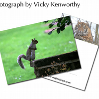 Grey Squirrel ACEO Print Photography by VK