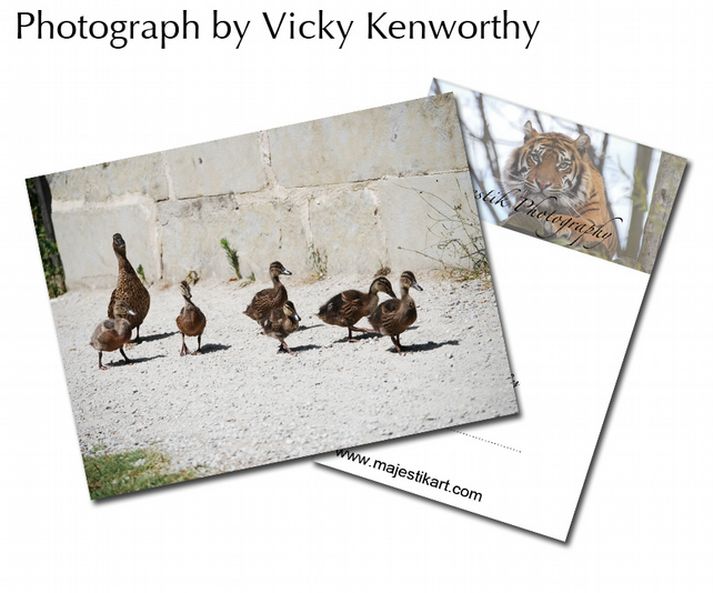 Duck ACEO Print Photography by VK