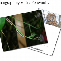 Caterpillar ACEO Print Photography by VK
