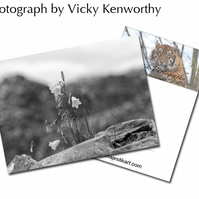 Bluebell ACEO Print Photography by VK
