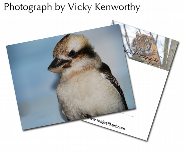 Kookaburra ACEO Print Photography by VK