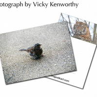 Thrush ACEO Print Photography by VK