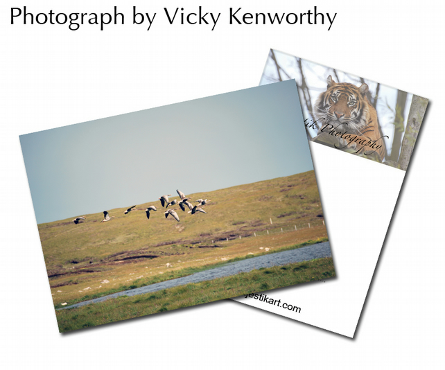 Geese ACEO Print Photography by VK