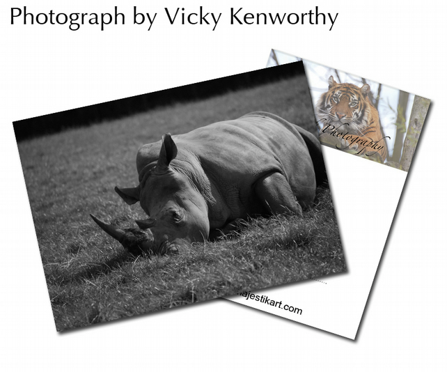 Rhino ACEO Print Photography by VK