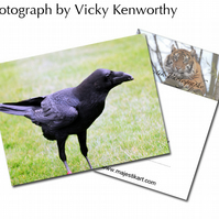 Raven ACEO Print Photography by VK