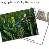Butterfly ACEO Print Photography by VK