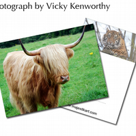 Highland Cow ACEO Print Photography by VK