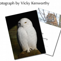 Owl ACEO Print Photography by VK