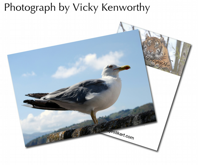 Sea Gull ACEO Print Photography by VK