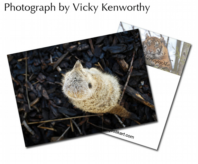 Meerkat ACEO Print Photography by VK