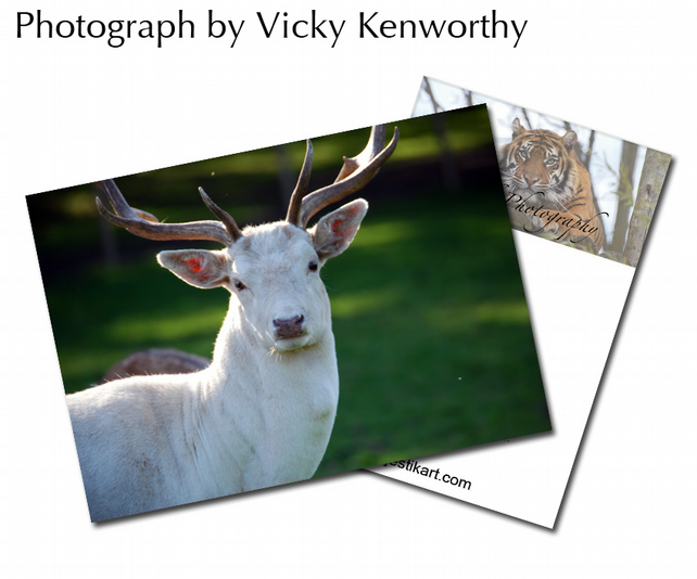 Deer ACEO Print Photography by VK