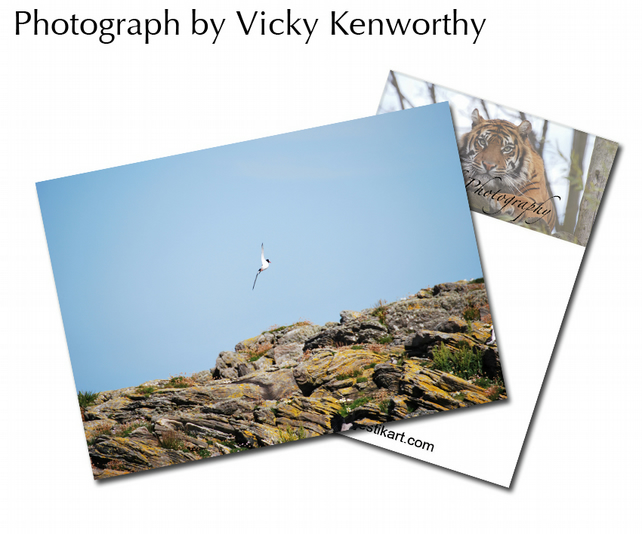 Sea Bird ACEO Print Photography by VK