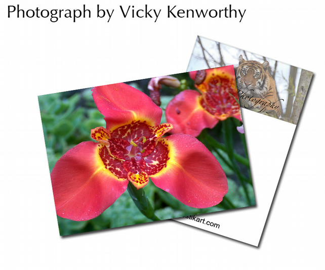 Flower ACEO Print Photography by VK