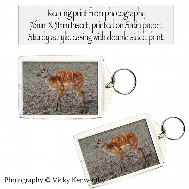 Eastern Bongo Keyring Photography by VK