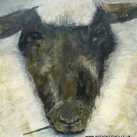 Sheep II   -  print from original animal painting